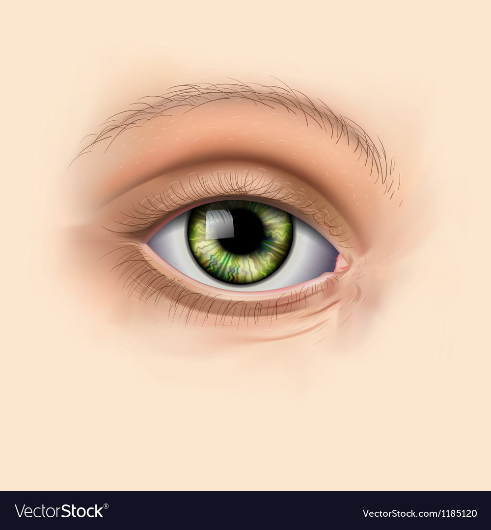 Woman green eye close up vector | Price: 3 Credit (USD $3)