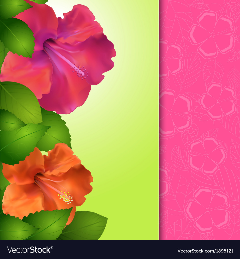 Hibiscus flower panel border vector | Price: 1 Credit (USD $1)