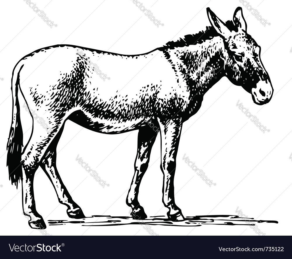 Donkey vector | Price: 1 Credit (USD $1)