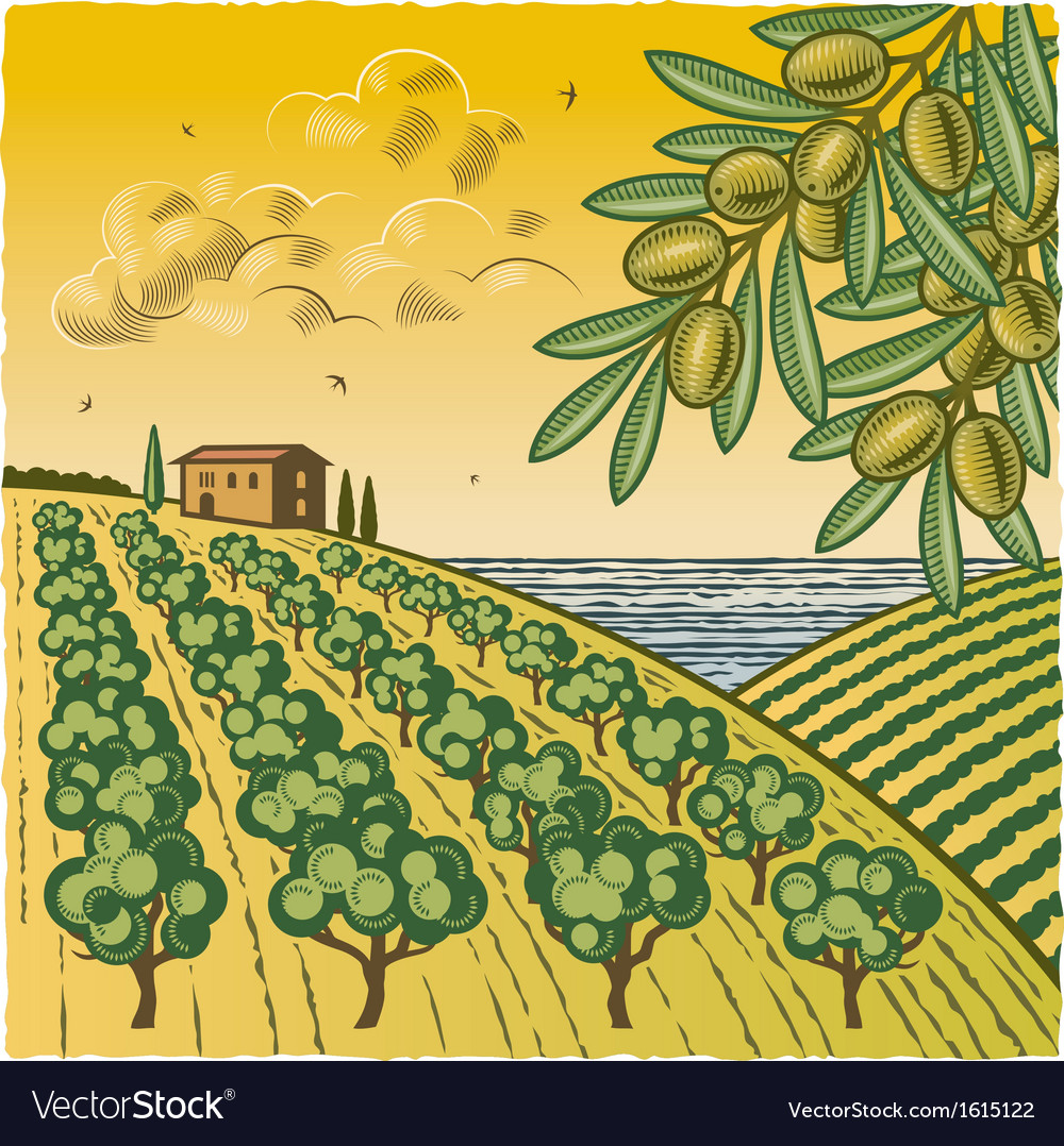 Landscape with olive grove vector | Price: 1 Credit (USD $1)