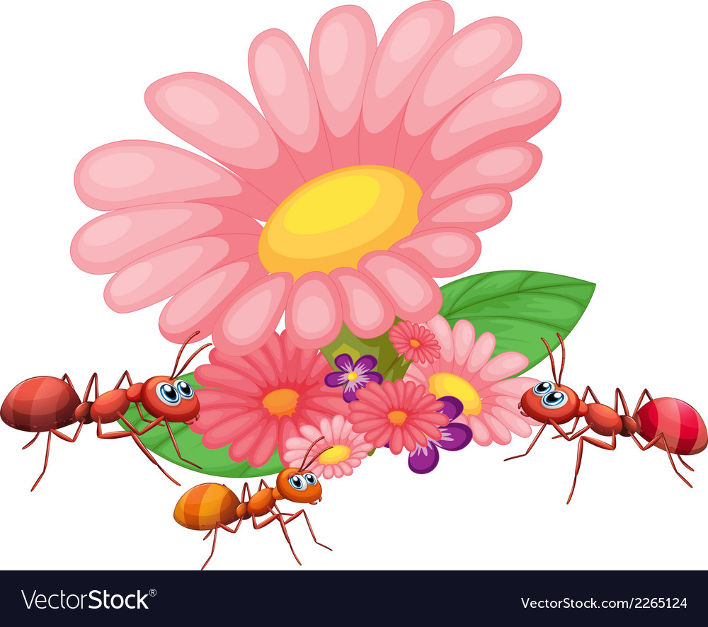Fresh flowers with ants vector | Price: 1 Credit (USD $1)