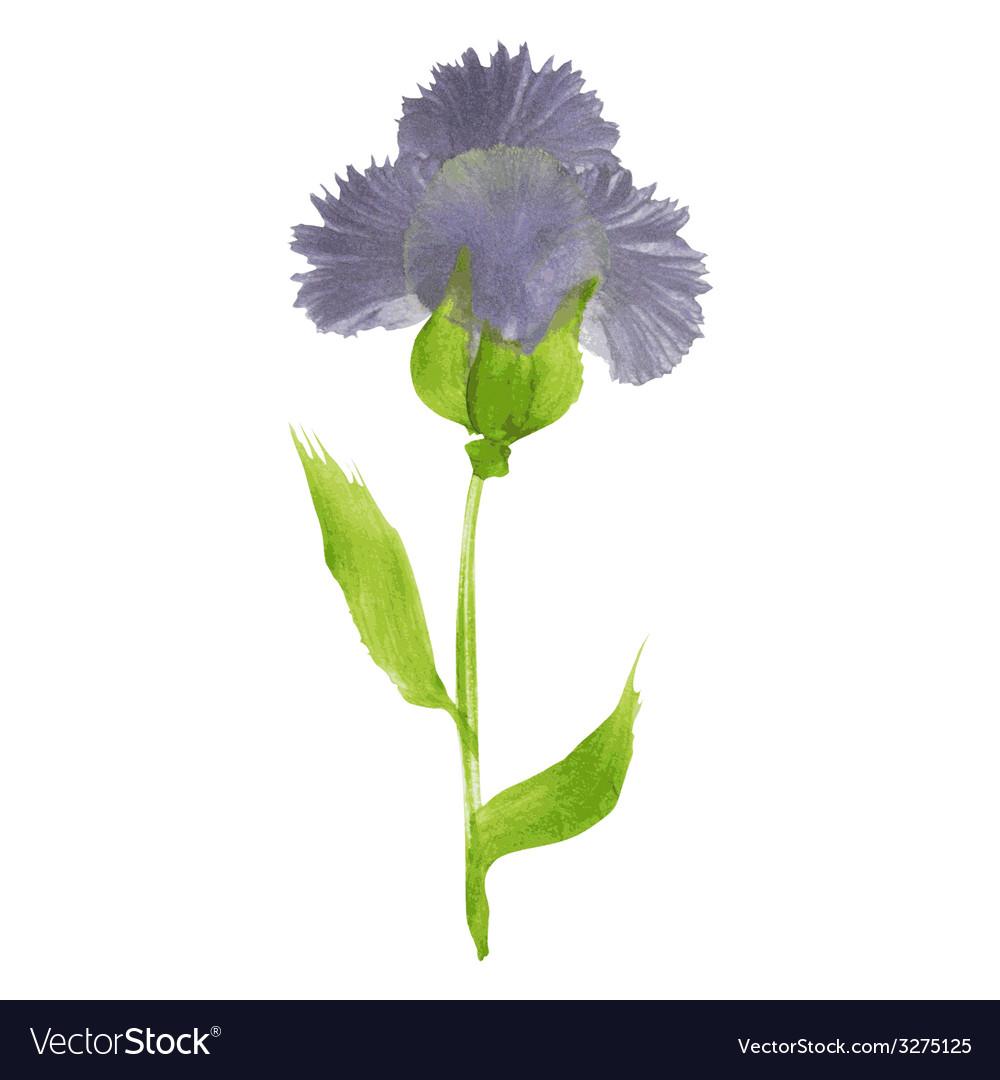 Watercolor flower vector   Price: 1 Credit (USD $1)
