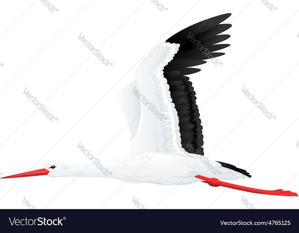 White stork flying vector | Price: 1 Credit (USD $1)