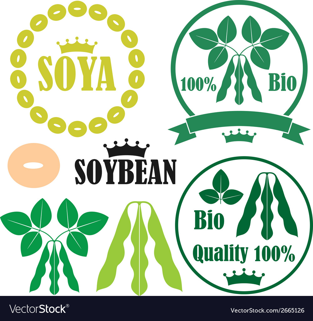 Soybean vector | Price: 1 Credit (USD $1)
