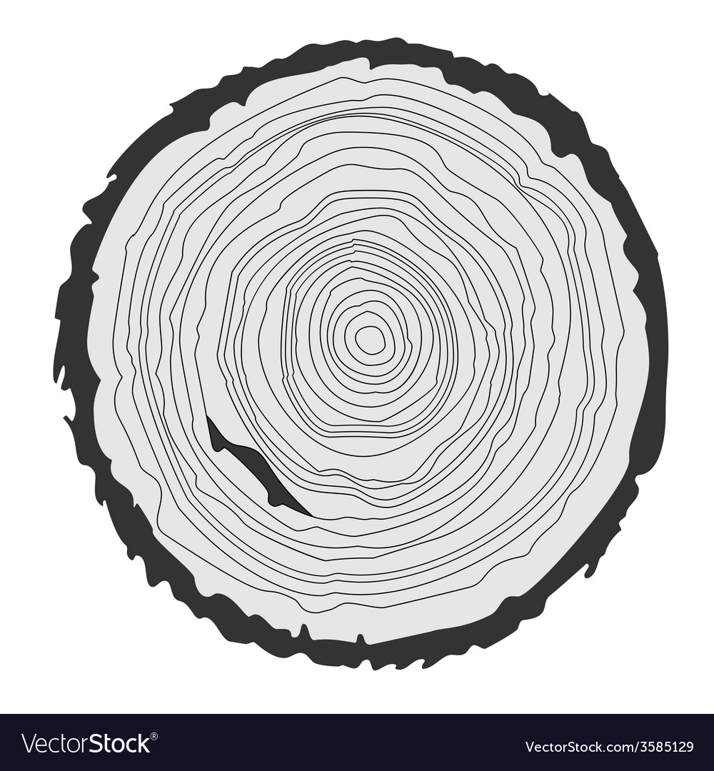 Conceptual background with tree-rings graphics vector | Price: 1 Credit (USD $1)