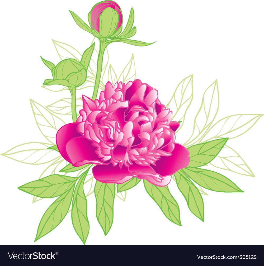 Peony flower vector | Price: 1 Credit (USD $1)