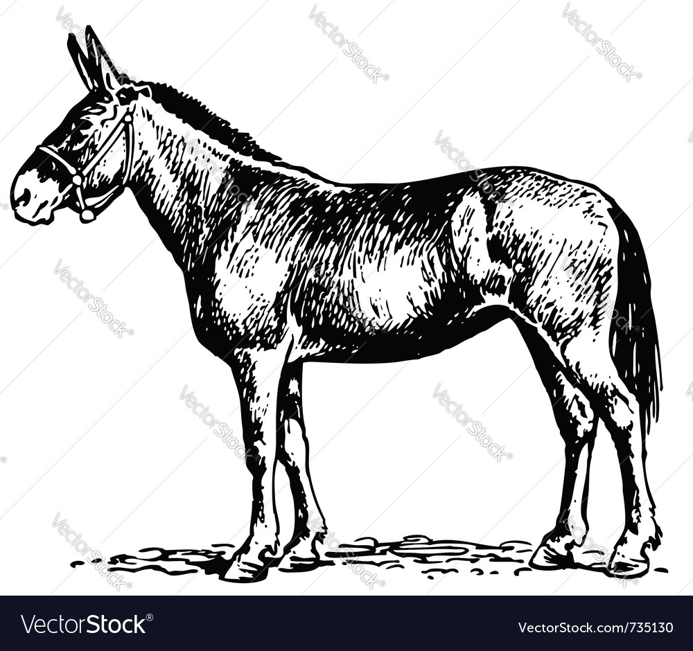 Mule vector | Price: 1 Credit (USD $1)
