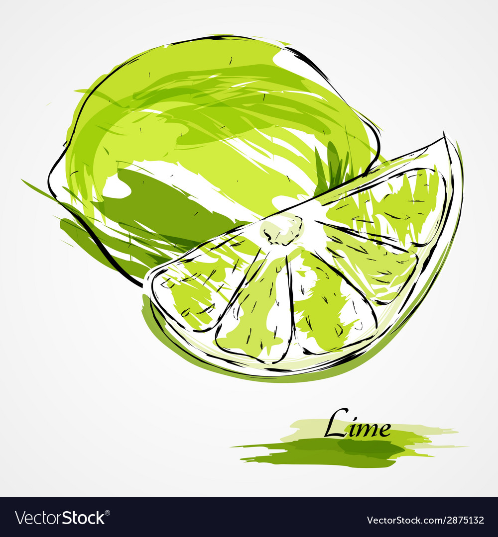 Lime fruit vector | Price: 1 Credit (USD $1)