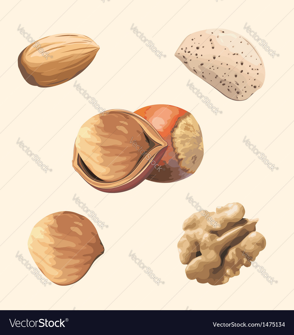 Nuts vector | Price: 1 Credit (USD $1)