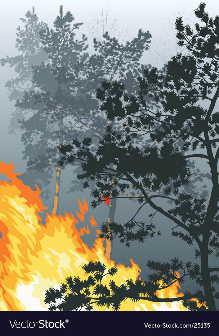 A fire in a wood vector