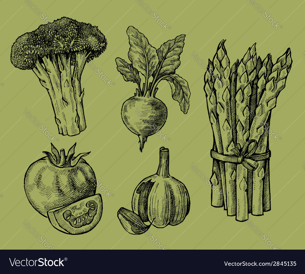 Hand drawn of vegetables vector | Price: 1 Credit (USD $1)