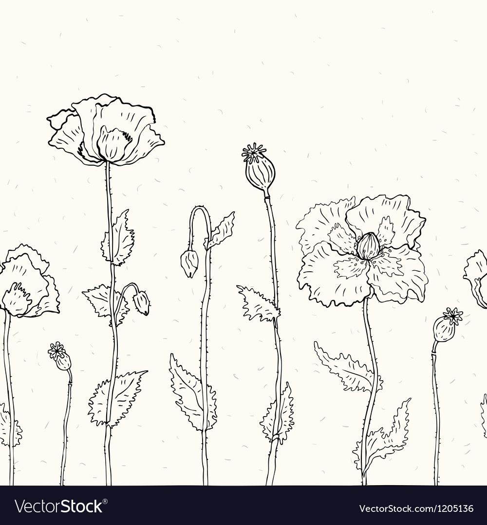 Floral background hand drawn poppies vector | Price: 1 Credit (USD $1)