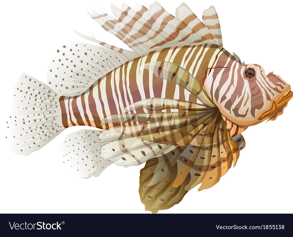 Lionfish vector | Price: 1 Credit (USD $1)