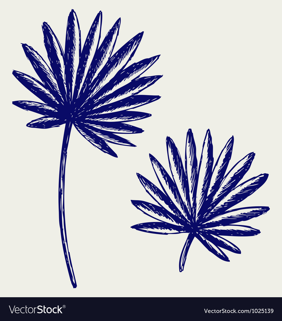 Palm leaves vector | Price: 1 Credit (USD $1)