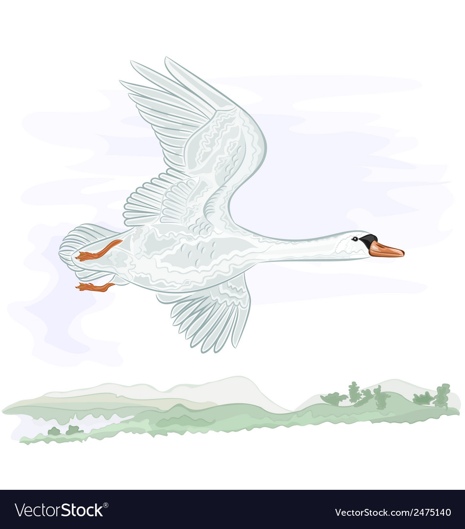 Flying high swan vector | Price: 1 Credit (USD $1)