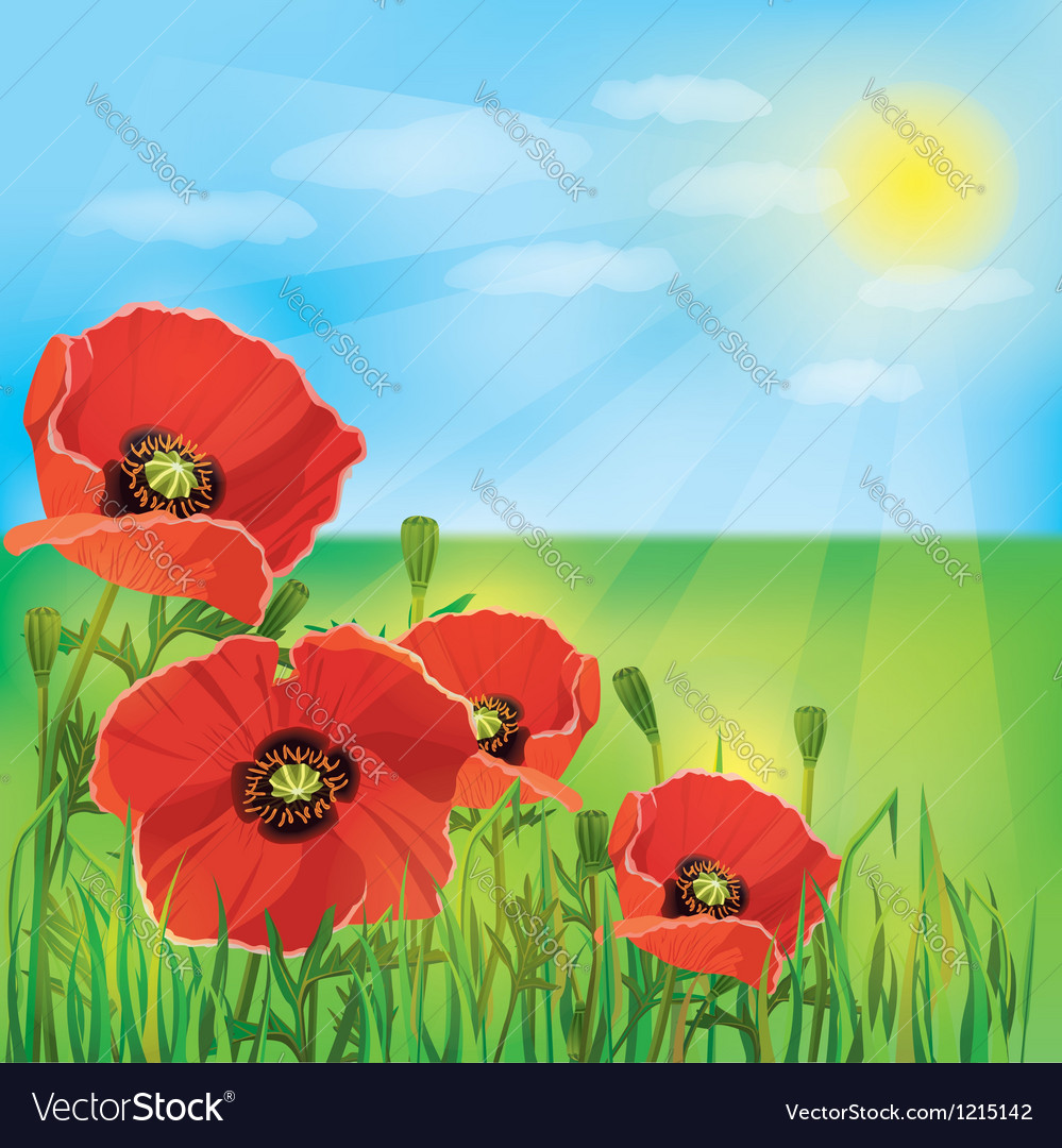 Nature background with flowers poppies vector | Price: 1 Credit (USD $1)