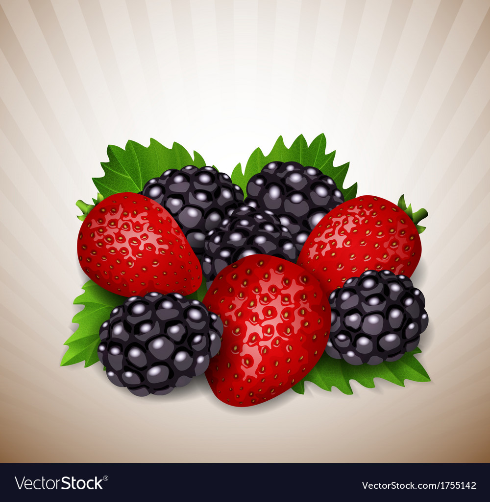 Strawberry and blackberry vector | Price: 1 Credit (USD $1)