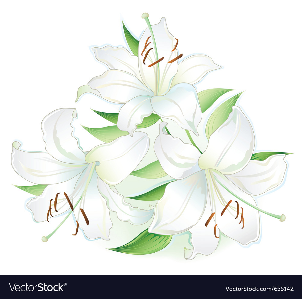 White lilly vector | Price: 1 Credit (USD $1)