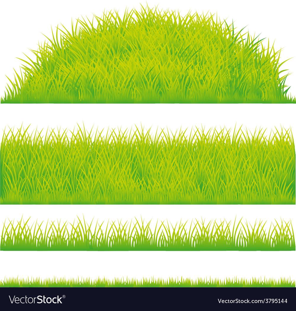 Green grass design element  vector