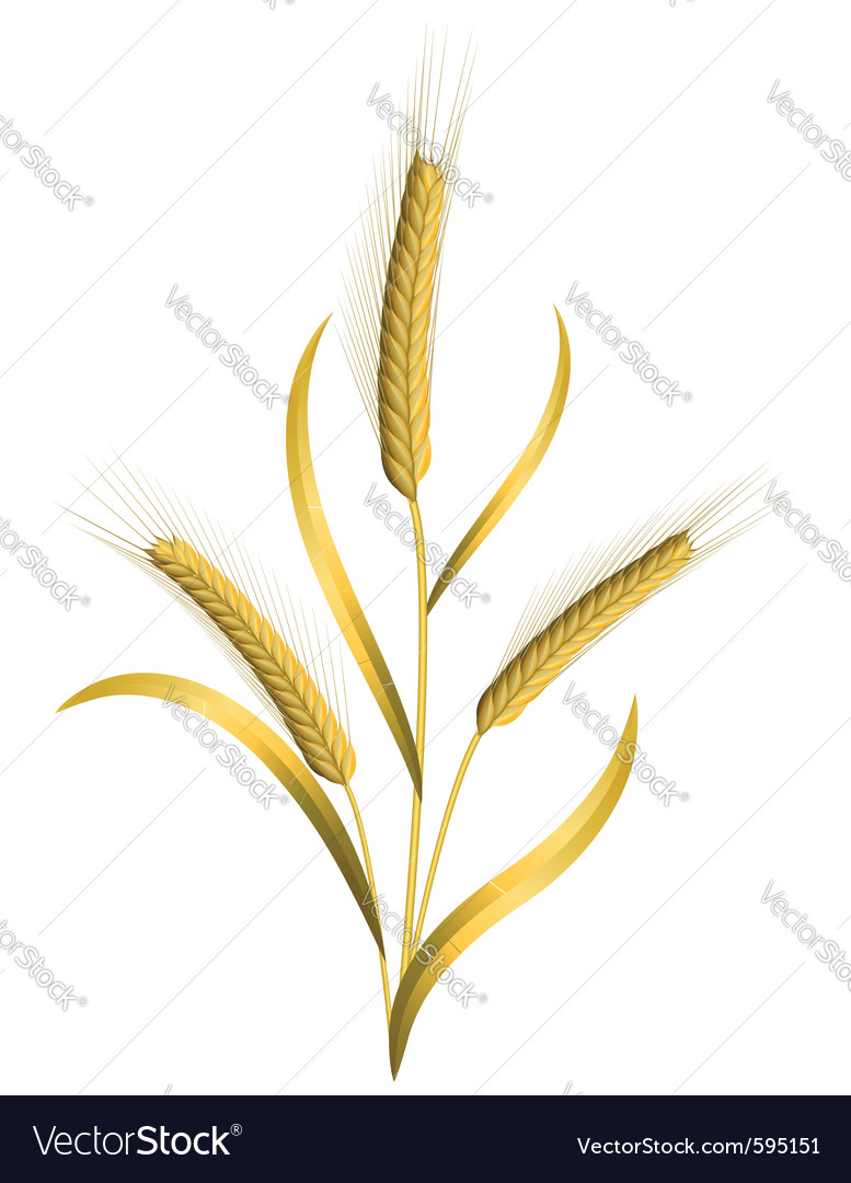 Ears of wheat vector | Price: 1 Credit (USD $1)
