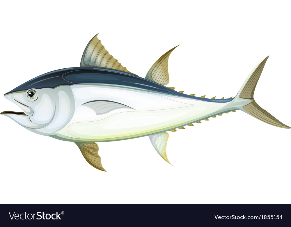 Atlantic bluefin tuna vector | Price: 1 Credit (USD $1)