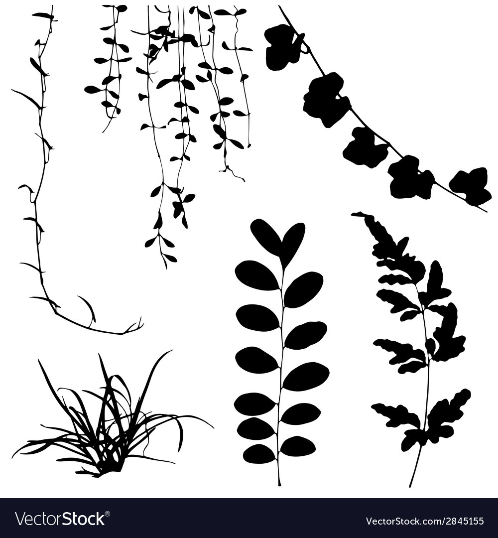 Silhouettes of leaf and vine plant vector | Price: 1 Credit (USD $1)