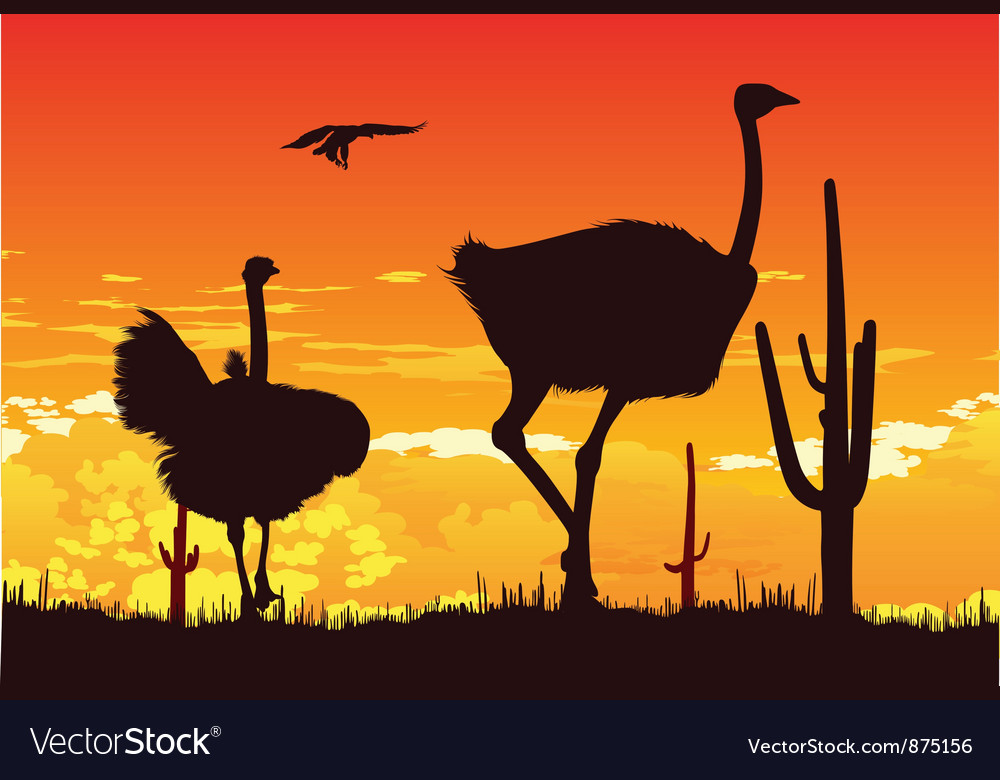 Wild ostriches among the cacti vector | Price: 1 Credit (USD $1)