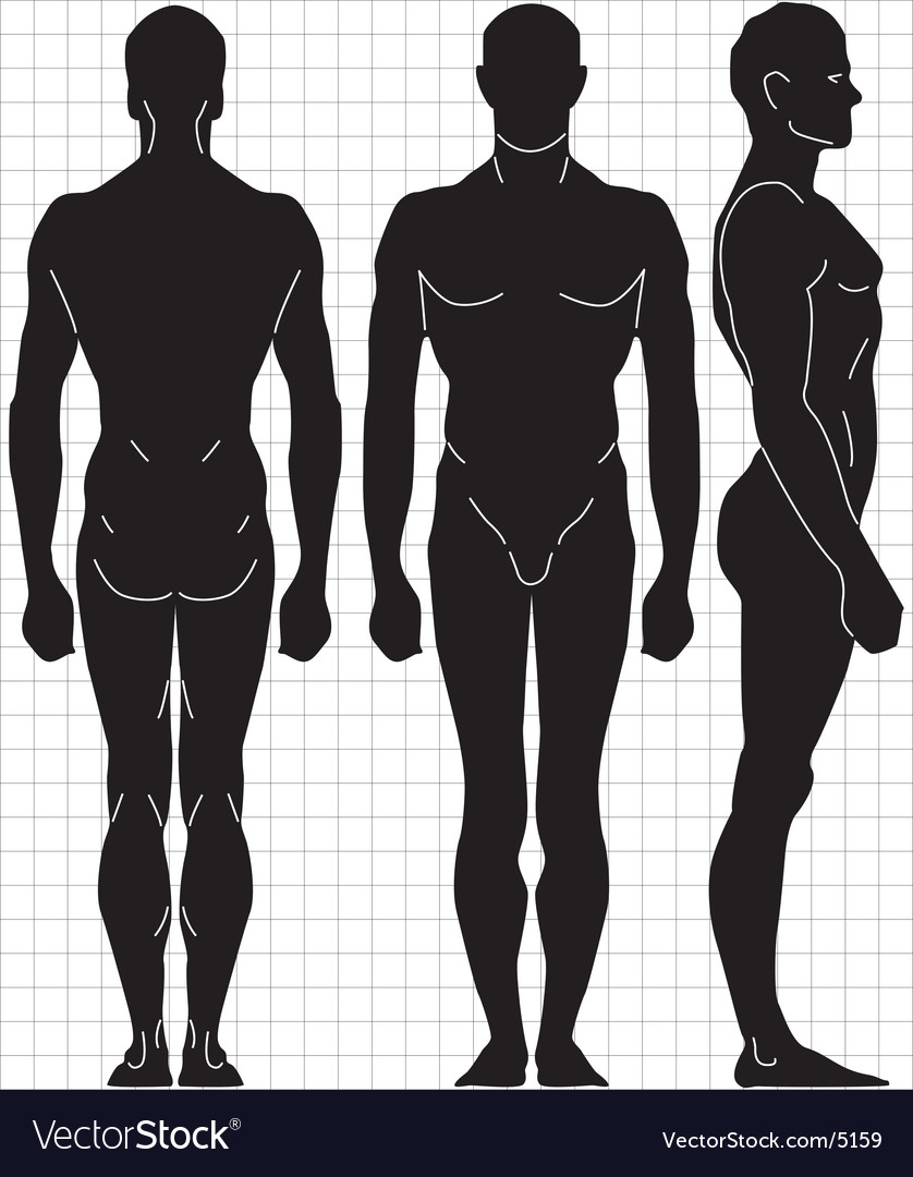Human proportions vector | Price: 1 Credit (USD $1)
