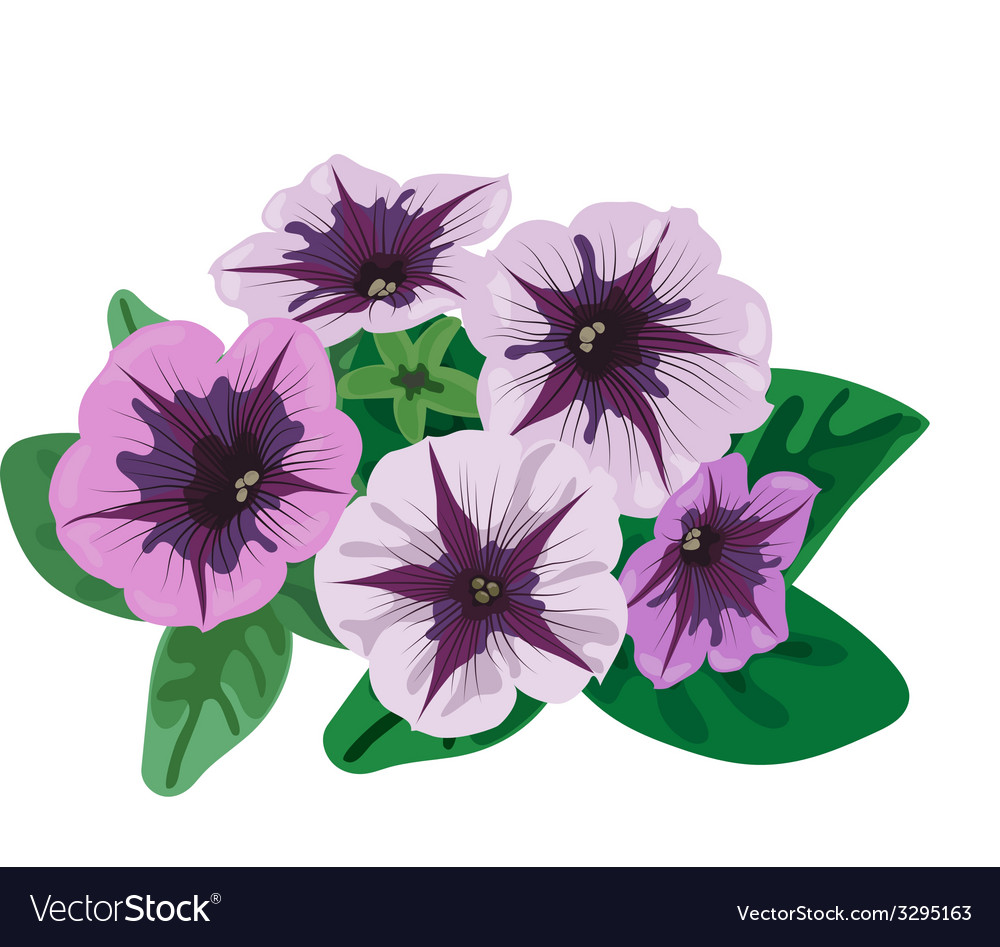 Petunia flowers bush vector | Price: 1 Credit (USD $1)