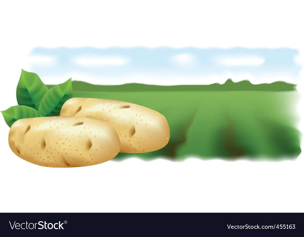Potato field landscape vector | Price: 1 Credit (USD $1)