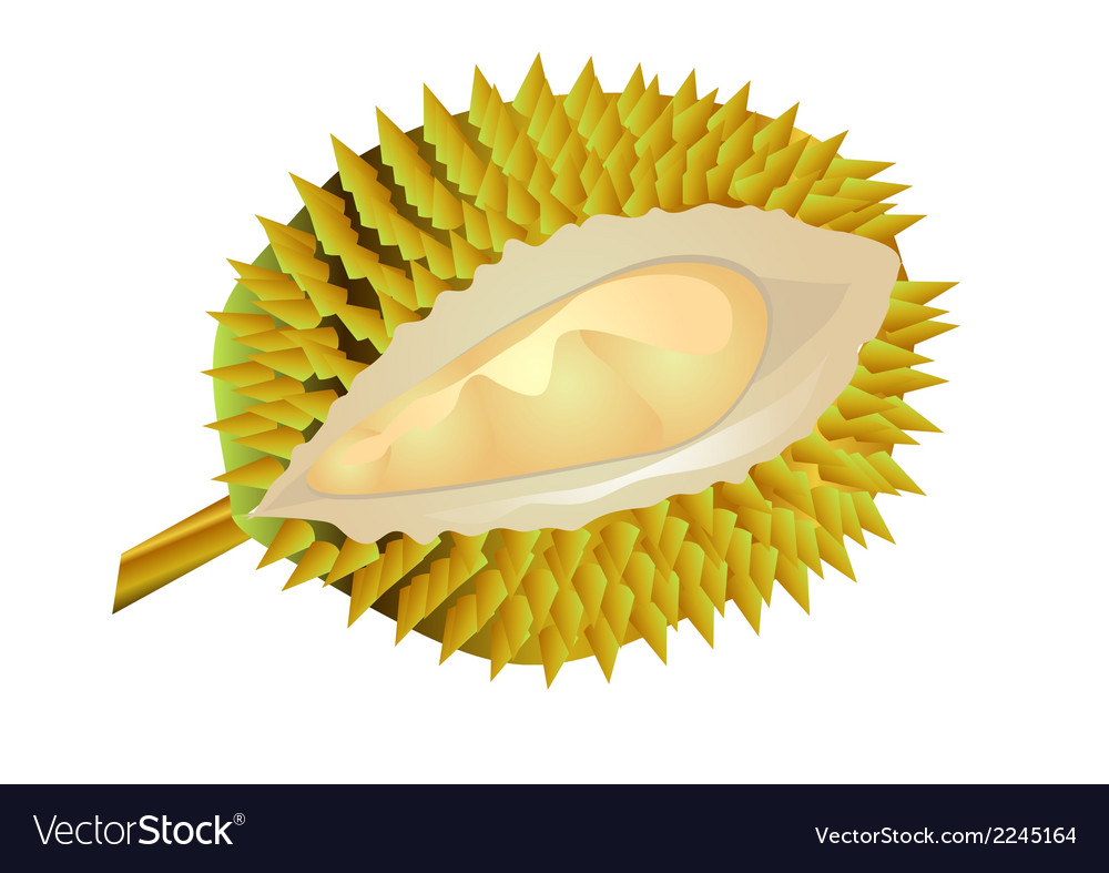 Durian fruit vector | Price: 1 Credit (USD $1)