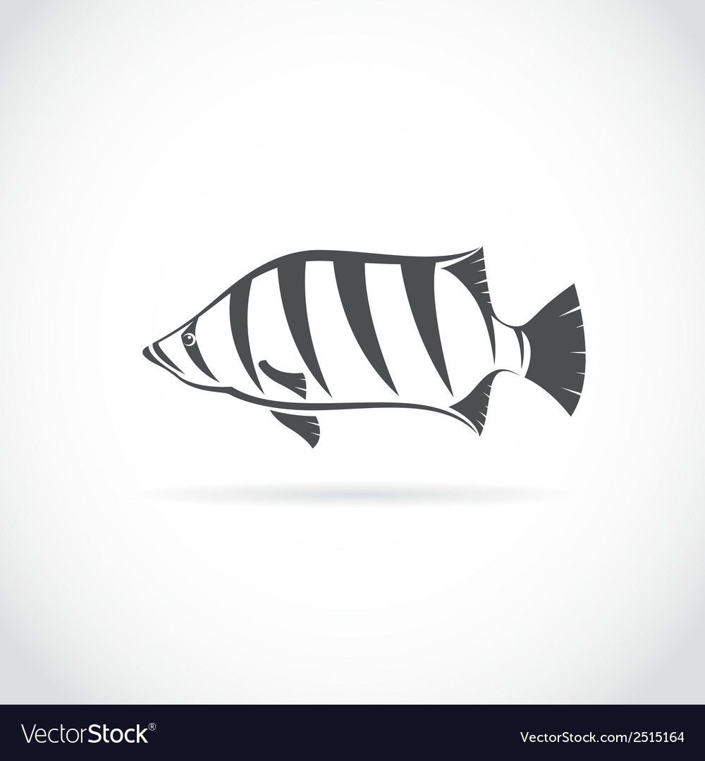 Image of an siamese tiger fish vector | Price: 1 Credit (USD $1)