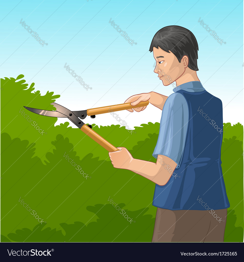 Gardener trimming a bush or tree with big clippers vector | Price: 1 Credit (USD $1)