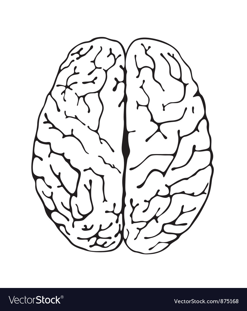 Brain a top view vector | Price: 1 Credit (USD $1)