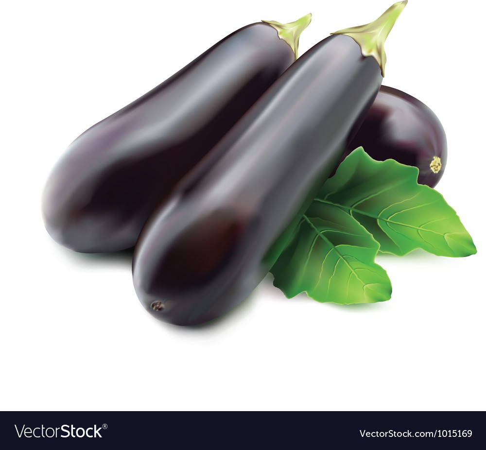 Eggplant or guinea squash vector | Price: 1 Credit (USD $1)