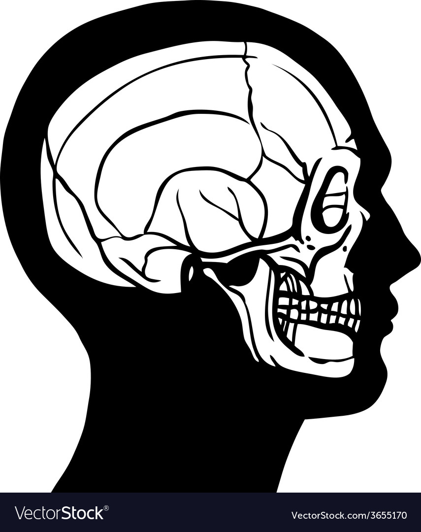 Human head with skull vector | Price: 1 Credit (USD $1)