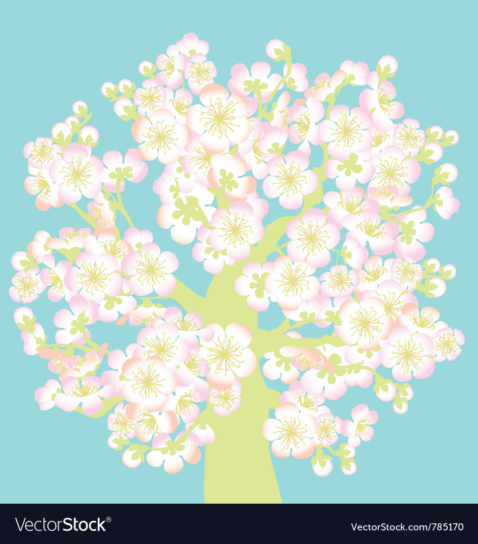 Sacura tree blossom vector