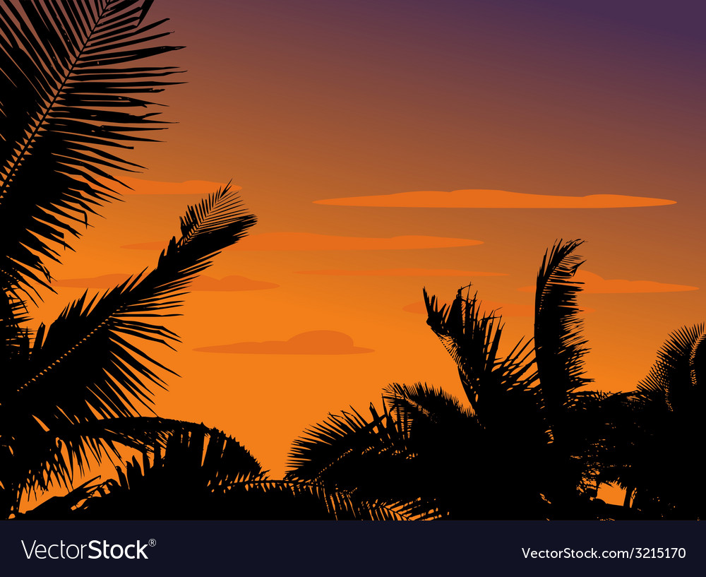 Silhouette palm plant vector | Price: 1 Credit (USD $1)
