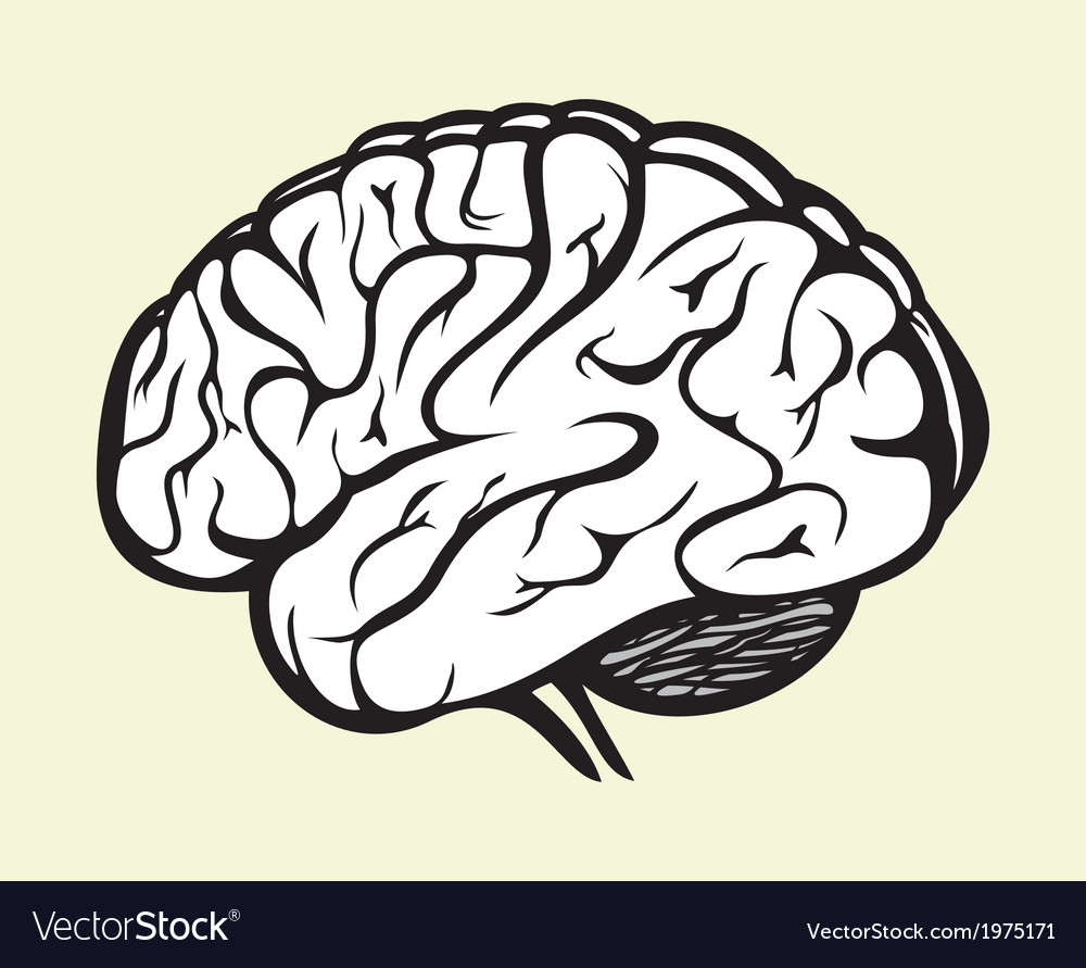 Brain2 vector | Price: 1 Credit (USD $1)