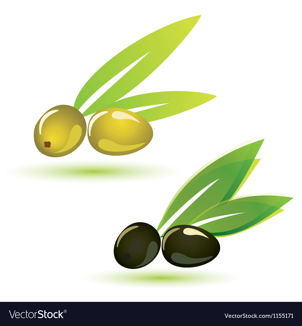 Olives natural vector | Price: 1 Credit (USD $1)