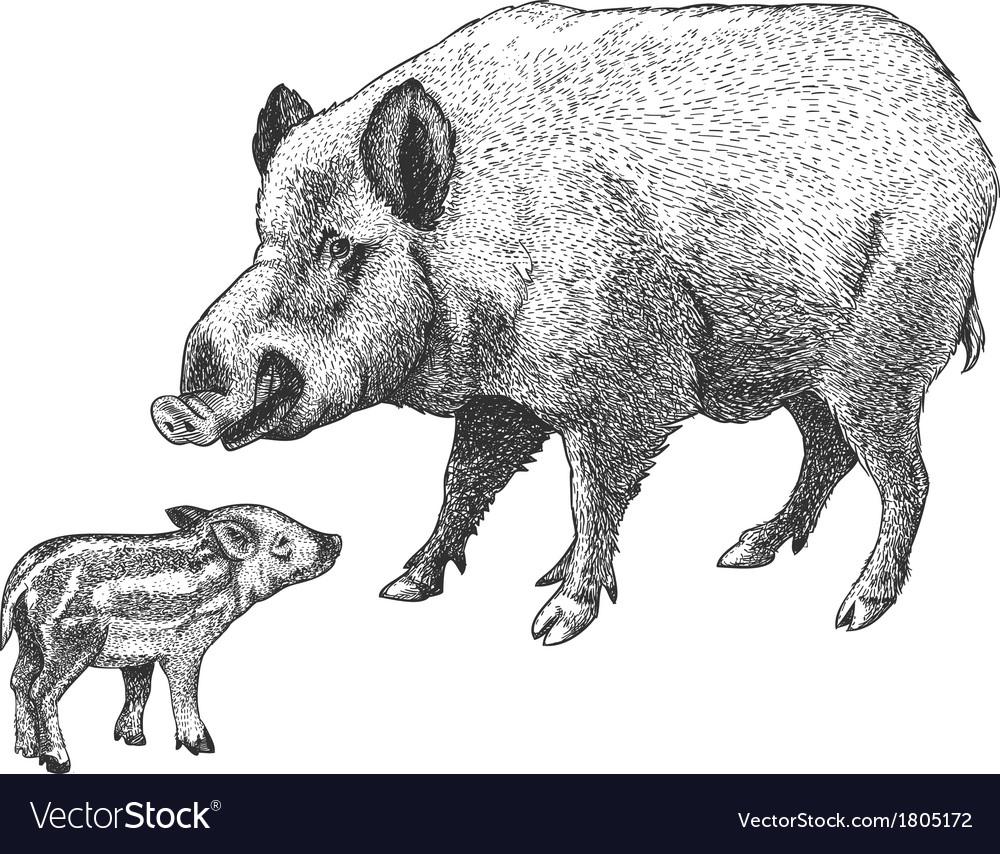 Engraving boar vector   Price: 1 Credit (USD $1)