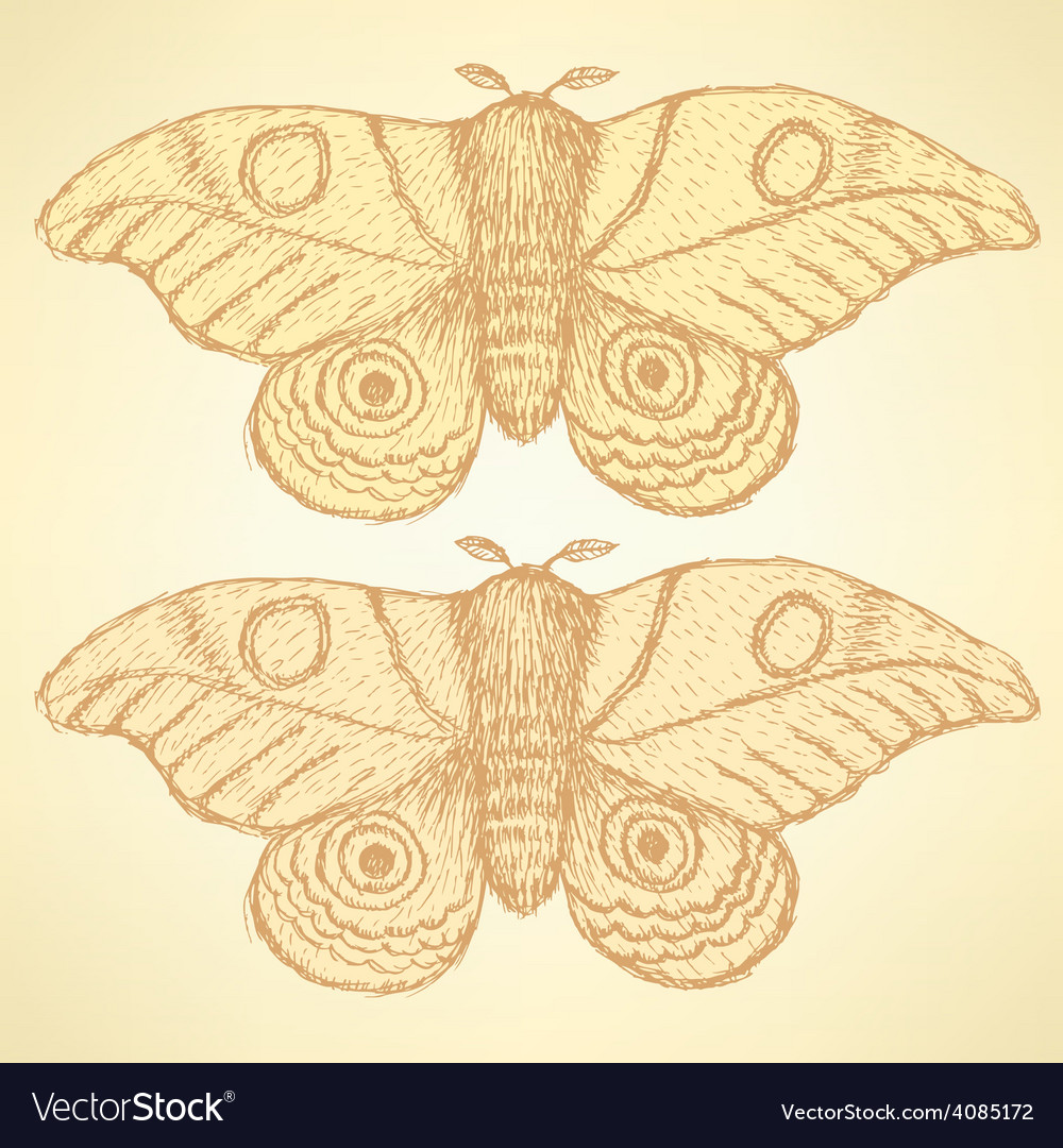 Sketch moth incect in vintage style vector | Price: 1 Credit (USD $1)
