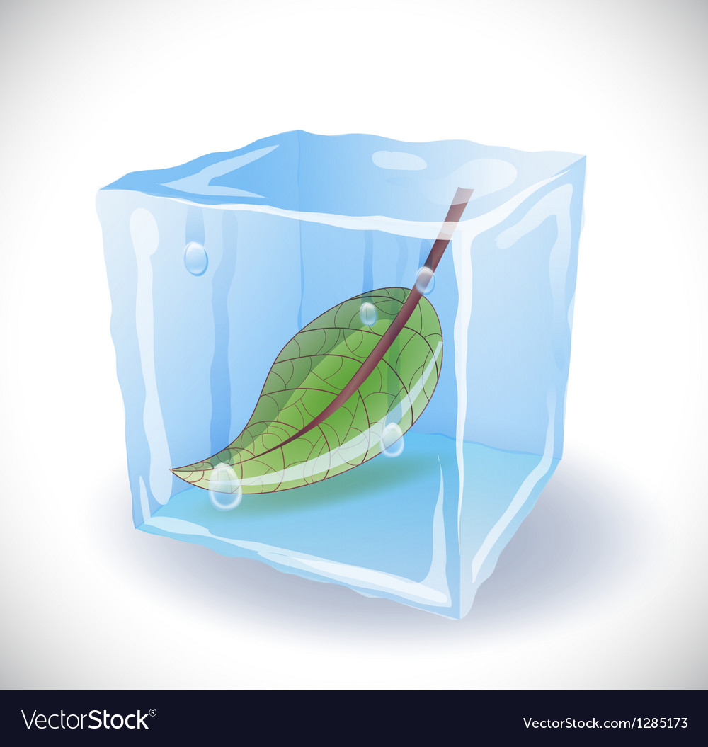 Ice cube with leaf vector | Price: 1 Credit (USD $1)