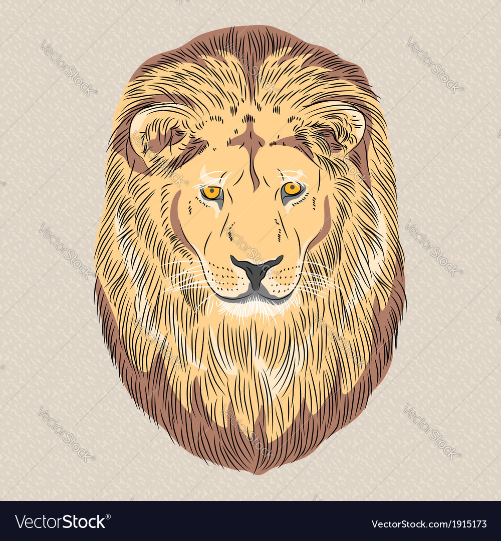 Serious wild big cat lion vector | Price: 1 Credit (USD $1)