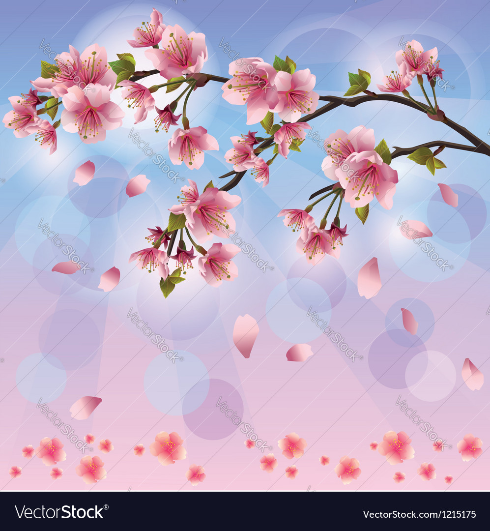 Spring background with sakura blossom japanese vector | Price: 1 Credit (USD $1)