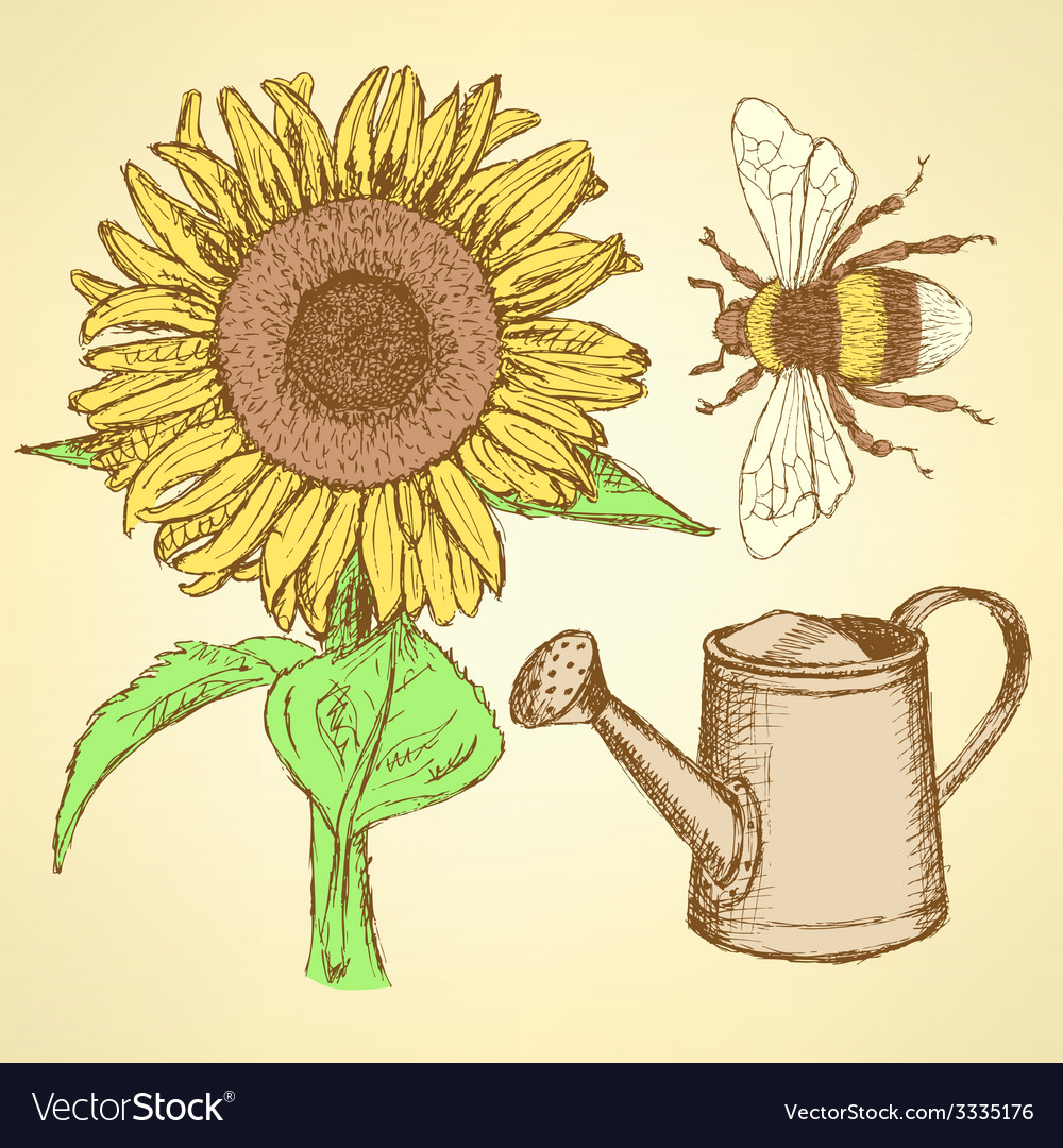 Sketch sunflower bee and watering can vector | Price: 1 Credit (USD $1)