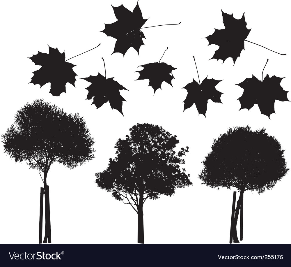 Tree and maple leaves silhouettes vector | Price: 1 Credit (USD $1)