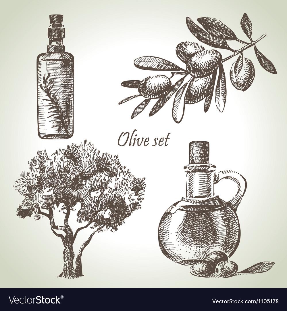 Hand drawn olive set vector | Price: 1 Credit (USD $1)