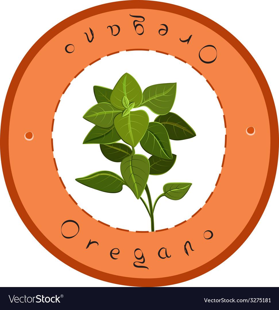 Fresh oregano vector | Price: 1 Credit (USD $1)
