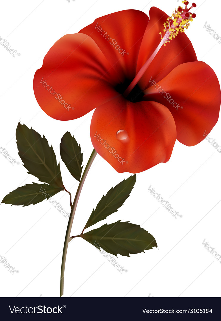 Beautiful red flower background with space for vector | Price: 1 Credit (USD $1)